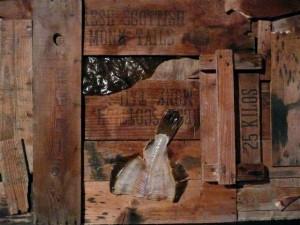 legno JMUIDEN PORT-Gianni Depaoli 120 x80 Anno 02.2010